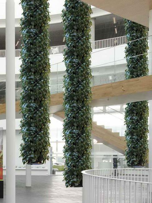 Hängende Gärten: Lianensystem.