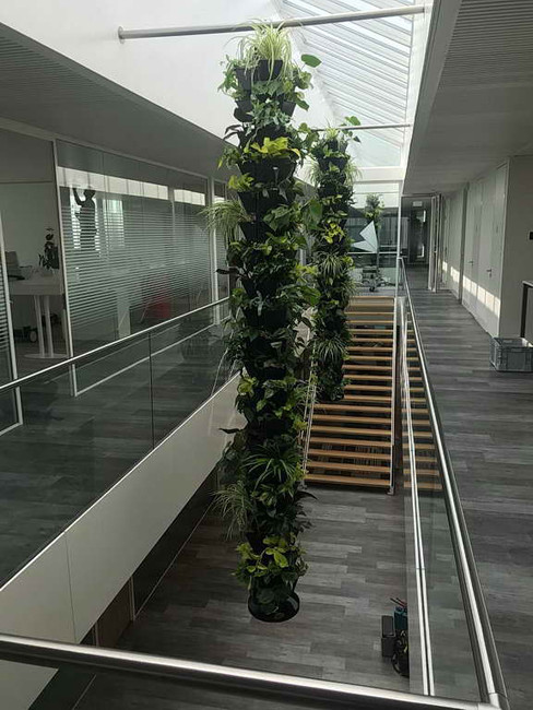 Lianensystem, Hängende Gärten
