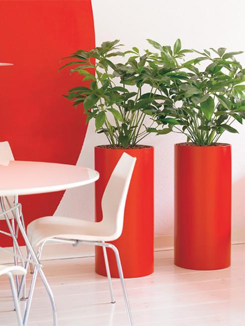 PLANTO Pflanzensäule aus Kunststoff