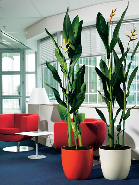 SOLA Pflanzengefäß aus Kunststoff
