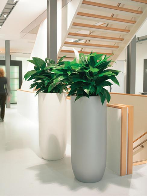 SOLA Pflanzensäule aus Kunststoff