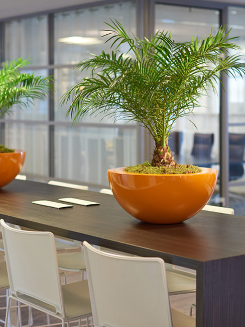 BOMO Table Planters with wide top edge
