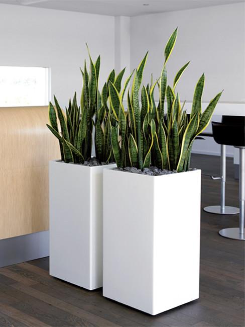 ZONDA: quadratische Pflanzensäule aus Kunststoff
