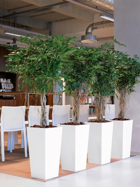 VOLTA: quadratisch und konische Pflanzensäulen aus Kunststoff